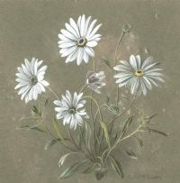 DAISIES by Elizabeth McEwen RUA at Ross's Auctions
