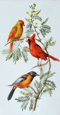VIRGINIA CARDINAL & TROUPIAL by Anne Marie Trechslin at Ross's Auctions