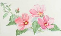 HIBISCUS by Anne Marie Trechslin at Ross's Auctions