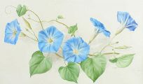 MORNING GLORY by Anne Marie Trechslin at Ross's Auctions