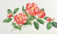 JAPANESE CAMELLIA by Anne Marie Trechslin at Ross's Auctions