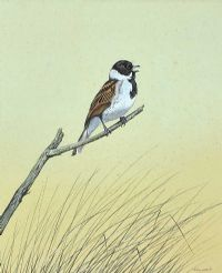 BIRD STUDY by Richard Ward at Ross's Auctions