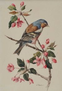CHAFFINCH by Anne Marie Trechslin at Ross's Auctions