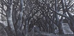 DARK HEDGES by Rachel Stewart at Ross's Auctions