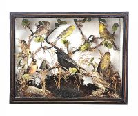 CASED BIRD SPECIMEN at Ross's Auctions