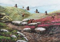 GROUSE OVER THE HEATHER by Pat Kenny at Ross's Auctions
