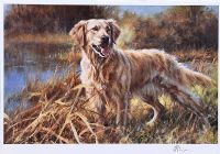 GOLDEN RETRIEVER by Mick Cawston at Ross's Auctions