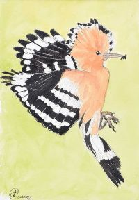 HOOPOE by Lynda Cookson at Ross's Auctions