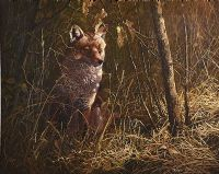 FOX IN THE WOODS by Stephen Cummins at Ross's Auctions